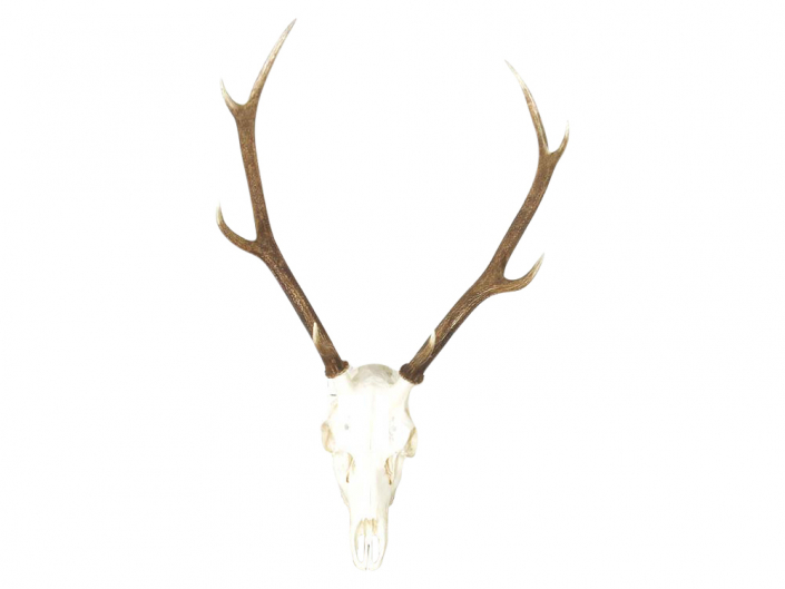 Antlers for Hire, Props, Events